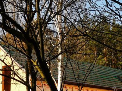 Dach System usługi dekarskie 95